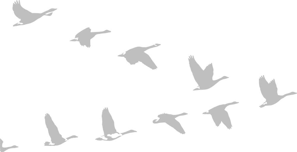 Graphic illustration of geese flying in V-formation