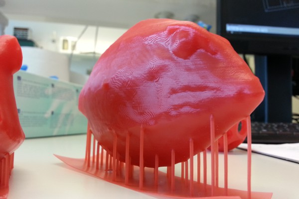 Photograph showing a red 3d printed model of a box fish